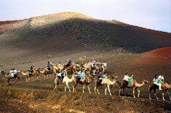 TourAdvisor: Paseo a camello en las dunas de Maspalomas en Gran Canaria partir de 12€
