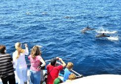 Ven a ver delfines a bordo del Spirit of the sea en Gran Canaria desde 27 € – TourAdvisor